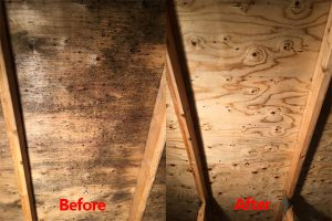 attic mold removal services in Kitchener-Waterloo, Ontario