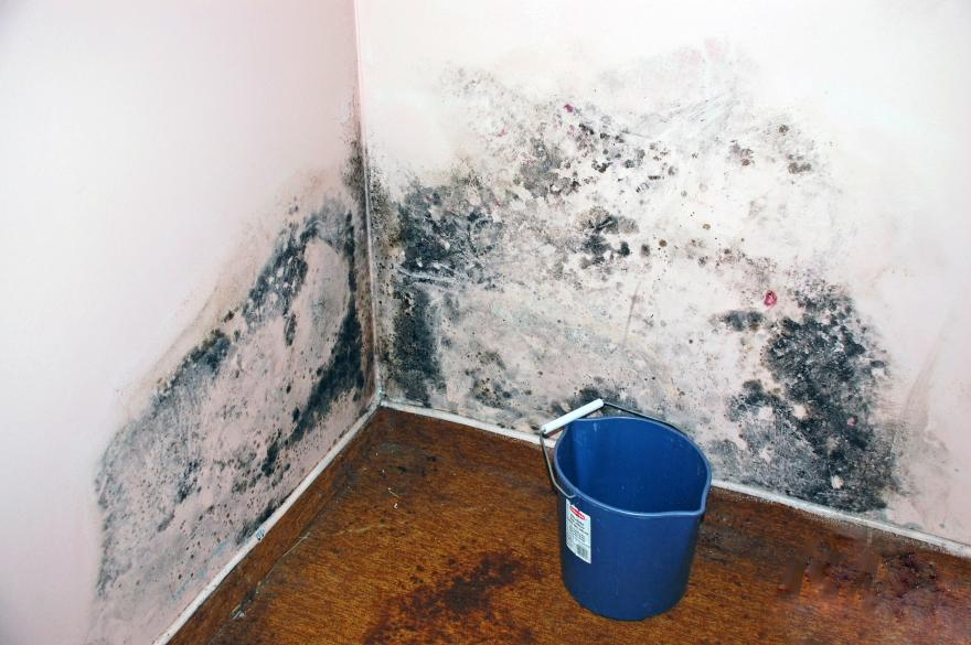 level 2 mold contamination Kitchener-Waterloo Ontario